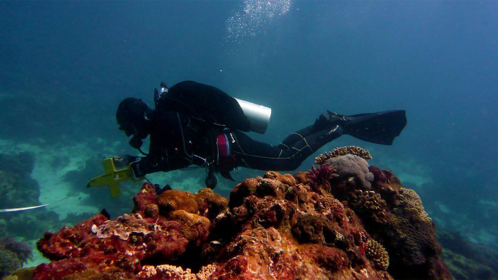 Diver completing fish and coral counts as part of her ongoing research, Flinders Reef north of Moreton Island, © copyright, Carrie Sims, UQ PhD student