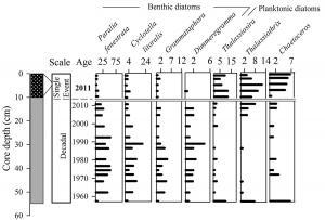 Abundance of diatoms in sediment core from Moreton Bay for period 1959-2011