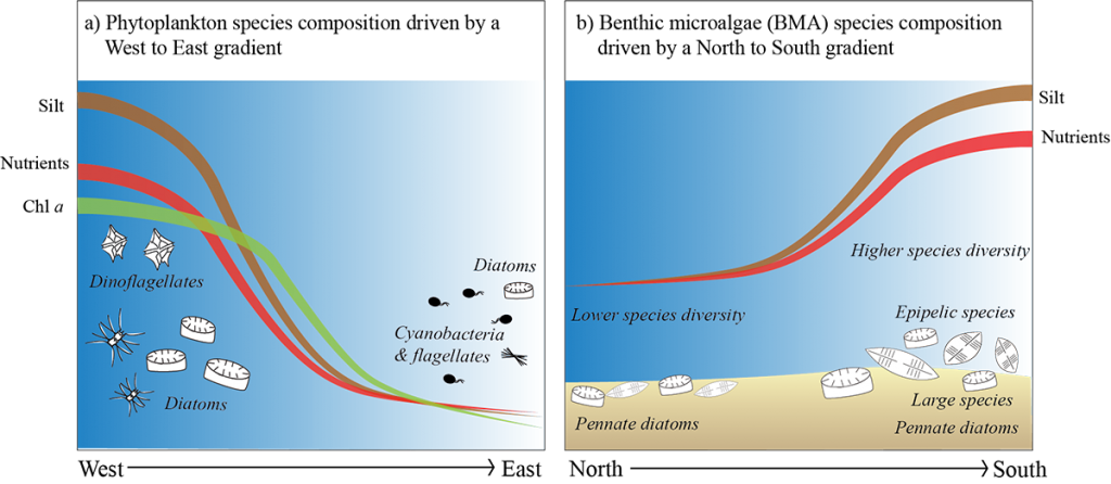 Conceptual diagram of gradient impacts on phytoplankton and BMA in Moreton Bay