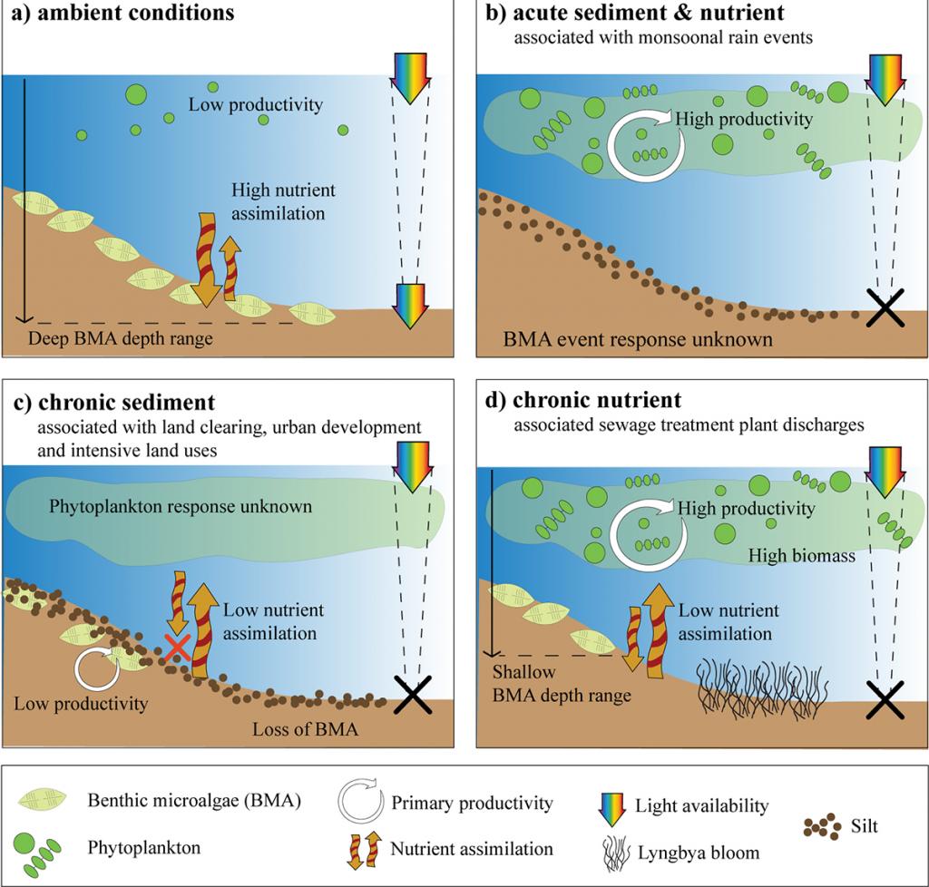 Conceptual diagrams of phytoplankton and BMA response to different scenarios