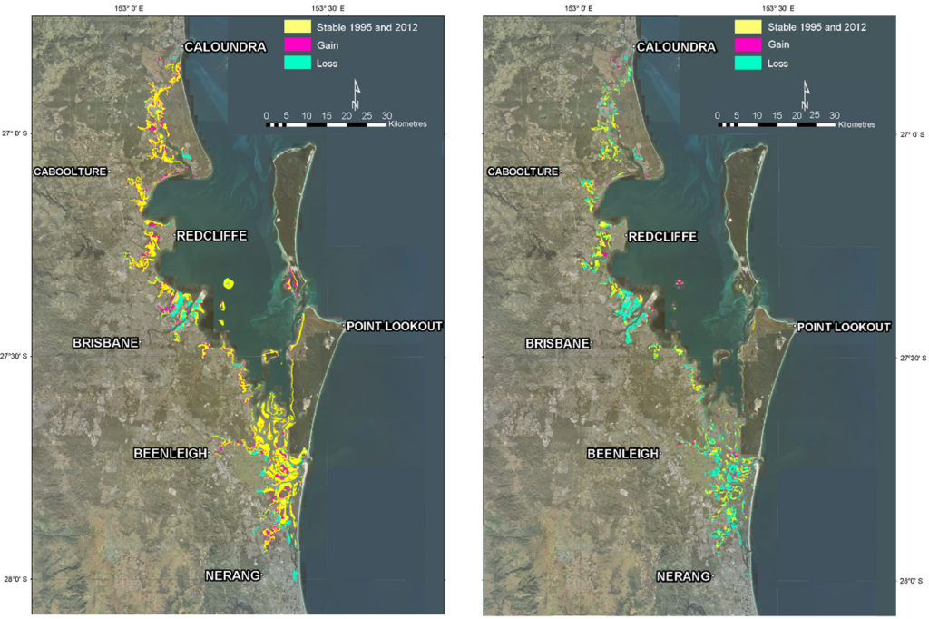 Distribution of mangrove forest in Moreton Bay with losses and gains from 1955-2012