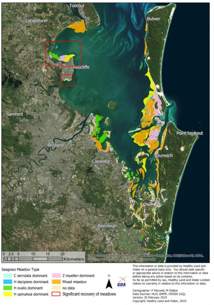 Distribution of seagrass species in Moreton Bay