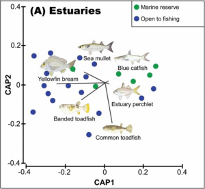 Estuary differences in composition of fish assemblages between marine reserves and fished locations in Moreton Bay
