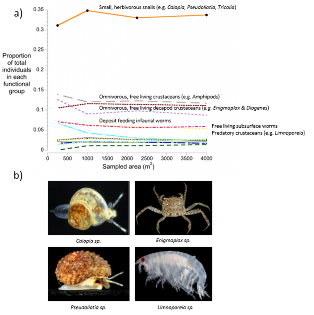 Factors influencing fauna assemblages in seagrass meadows of Moreton Bay