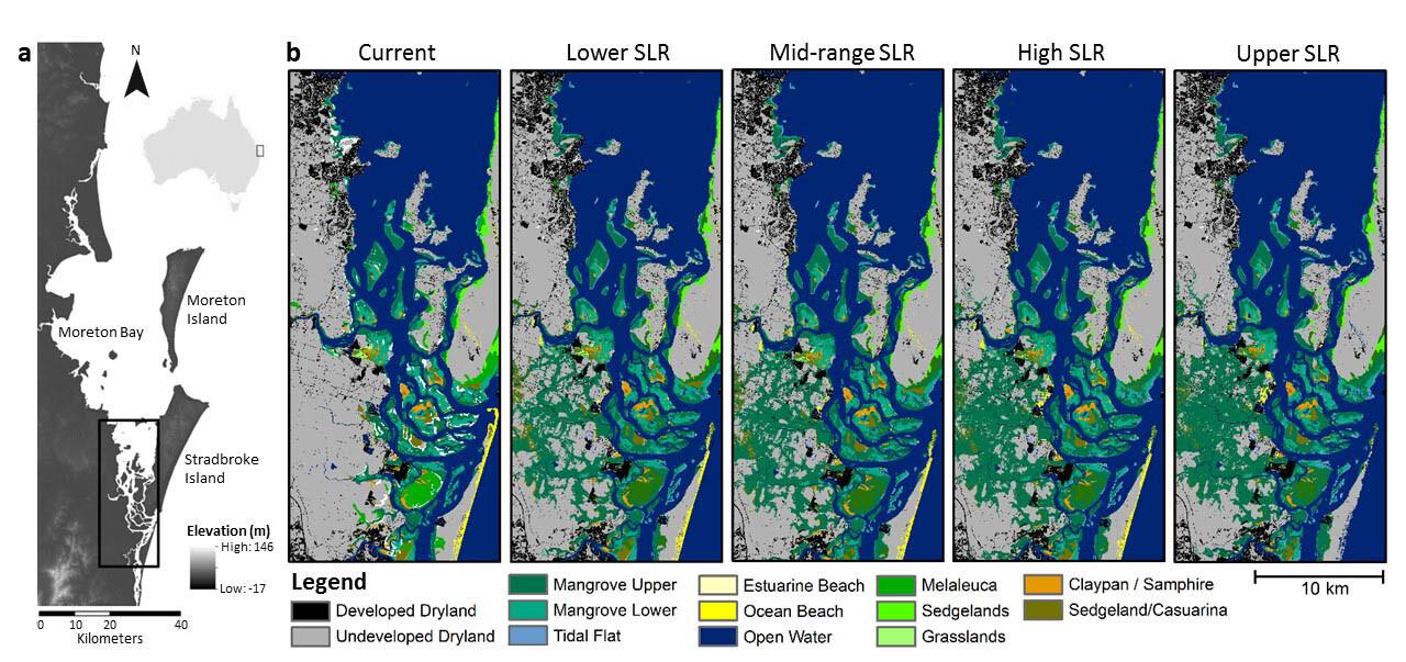 Moreton Bay coastal wetland distribution in 2050 under sea level rise