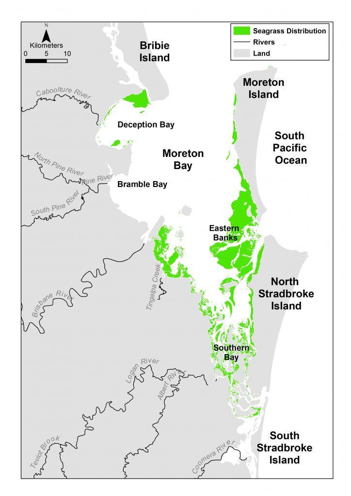 https://moretonbayfoundation.org/wp-content/uploads/2019/01/Moreton-Bay-seagrass-meadows.jpg