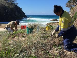 QYAC rangers restoring vegetation in South Gorge_North Stradbroke Island