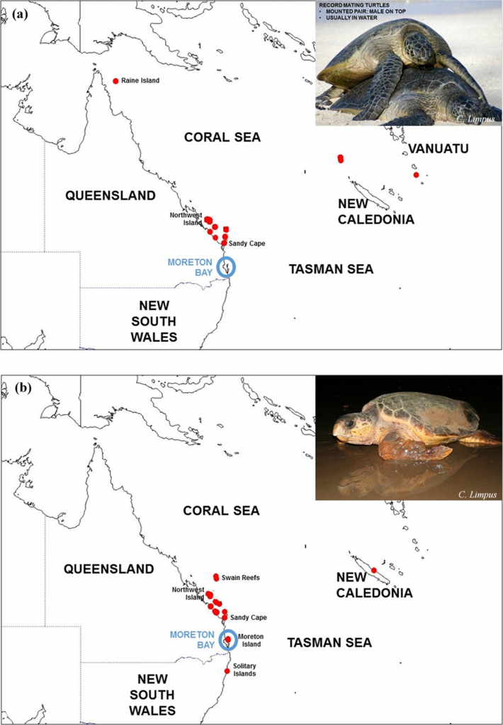 Rookeries of South Pacific green (Chelonia mydas)  and (b) loggerhead (Caretta caretta) turtles that forage in Moreton Bay