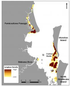 Lyngbya extent based on monitoring data DEHP 2003 to 2012