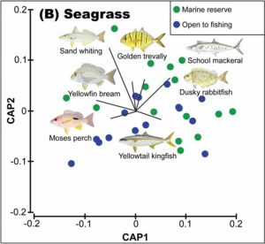 Seagrass differences in composition of fish assemblages between marine reserves and fished locations in Moreton Bay