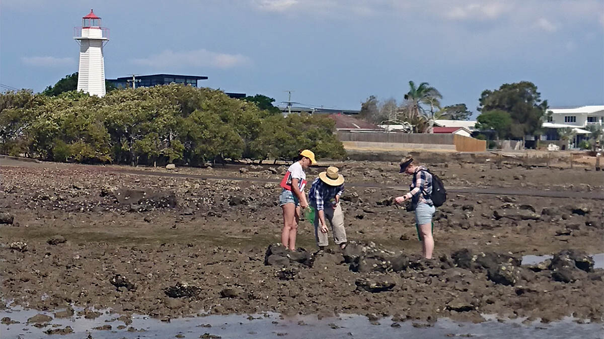 QUT and Griffith University surveying Cleveland Point shore for invasive species