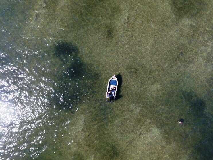 Drone photo showing black Lyngbya clumps on seagrass beds. Photo Stephen Faggotter