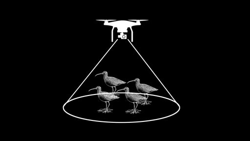 UAV to survey shorebirds graphic © Josh Wilson