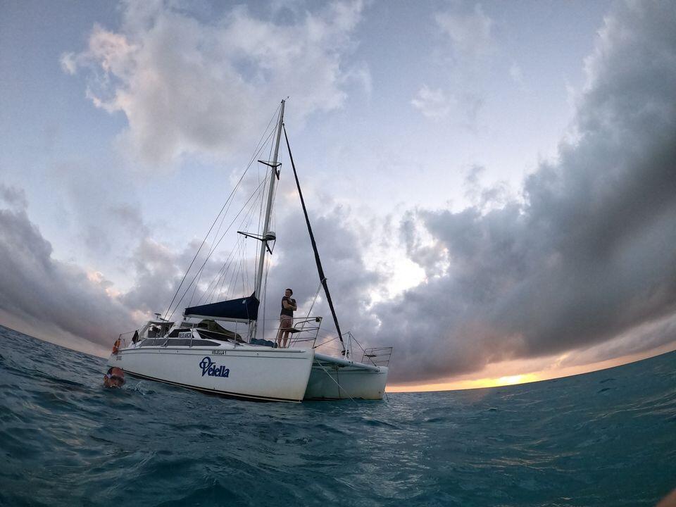 Velella - Science Under Sail